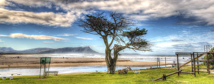 Tree on the beach, Kleinmond, South Africa
